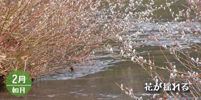 ネコヤナギ・エコ工法/2月